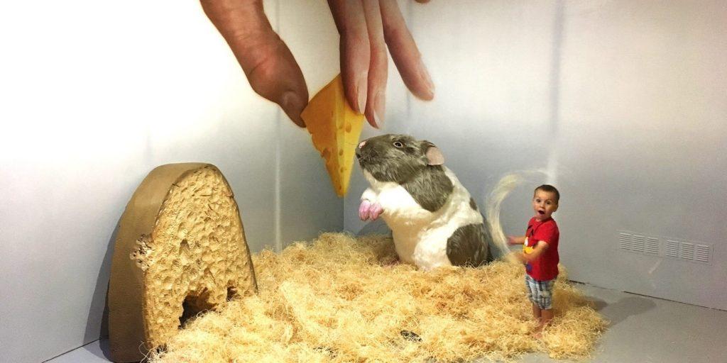 dieta-galeria-skrecok-syr-zmensenie-iluzia-akvarium