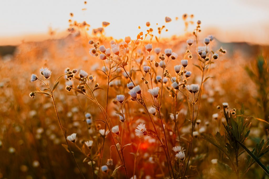 kvety-slnko-zapad-priroda-jar-zobudzanie