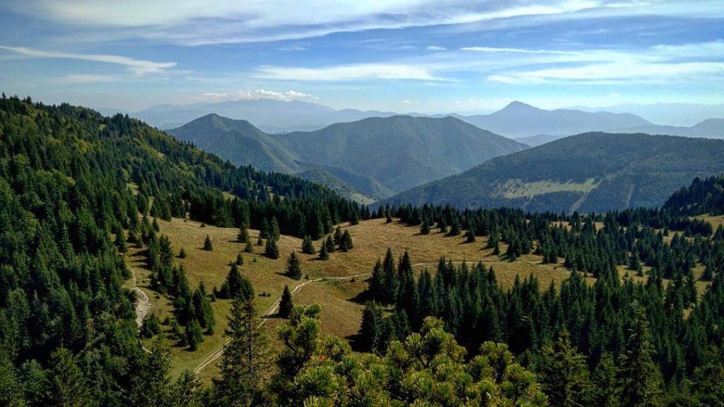 maly-rozsutec-mala-fatra-les-stromy-pohorie