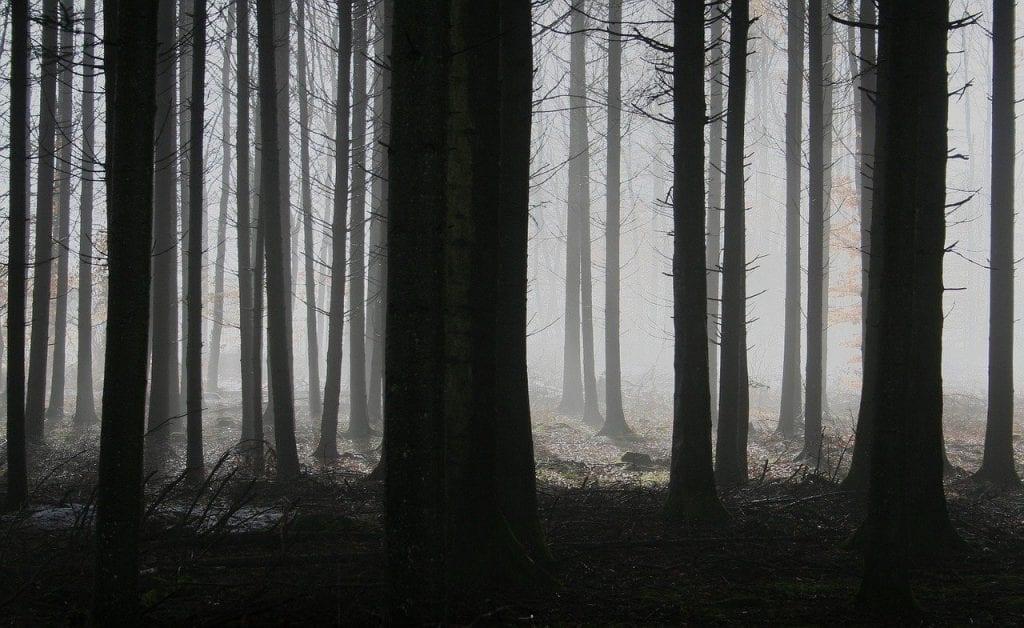 temnota-les-stromy-ticho-hmla-konare