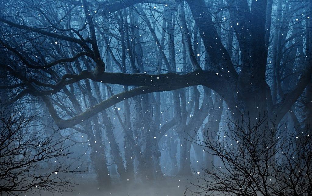 svetlonos-svetlusky-temny-les-tma-noc-stromy