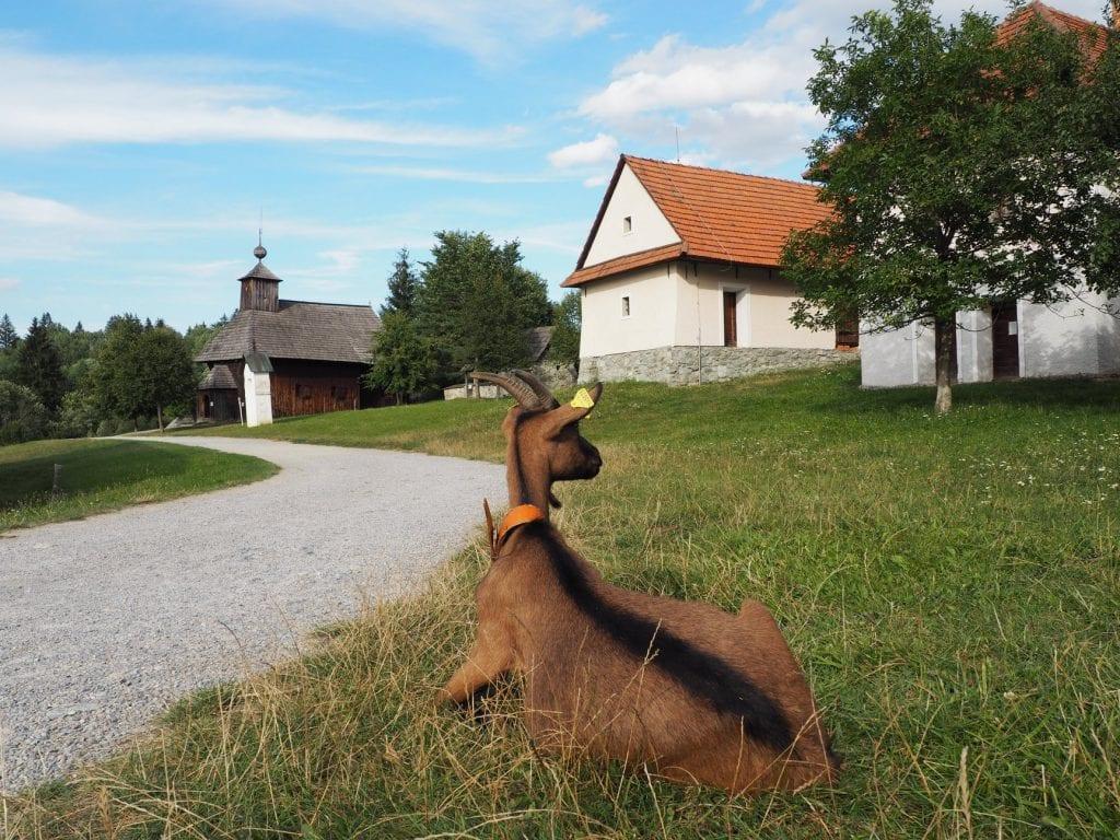 koza-skanzen-martin-dedina-dreveny-kostol-trava-chodnik-domy