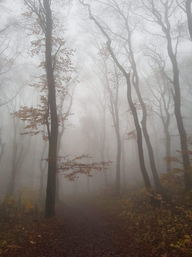 stromy-hmla-les-tribec-pohorie-chodnik-lesna-cesta